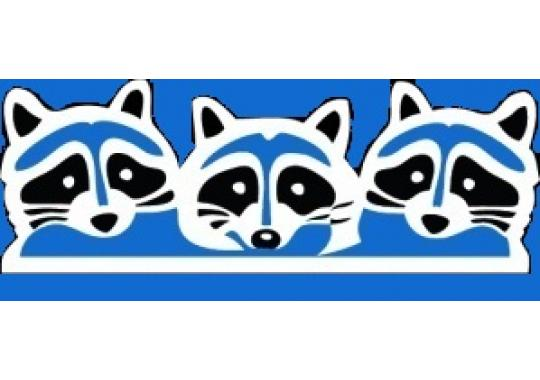 Blue Raccoon Consulting Group, LLC logo