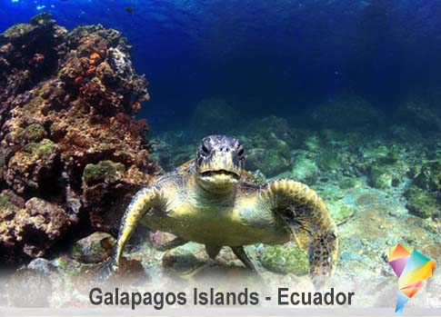 Galapagos Wildlife in Ecuador with SouthAmerica.travel