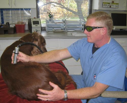 First and only animal Hospital in Northeastern Ohio to have a Class IV Healing Laser. We use this new modality for pain relief, anti-inflammatory and healing wounds including surgical incisions.  We have used our laser for hip dysplasia, arthritis, anal s