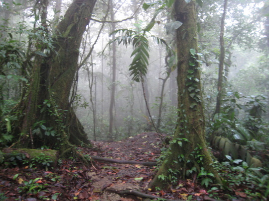 Guided hikes and walks through the tropical rainforest are a great way to discover Costa Rica