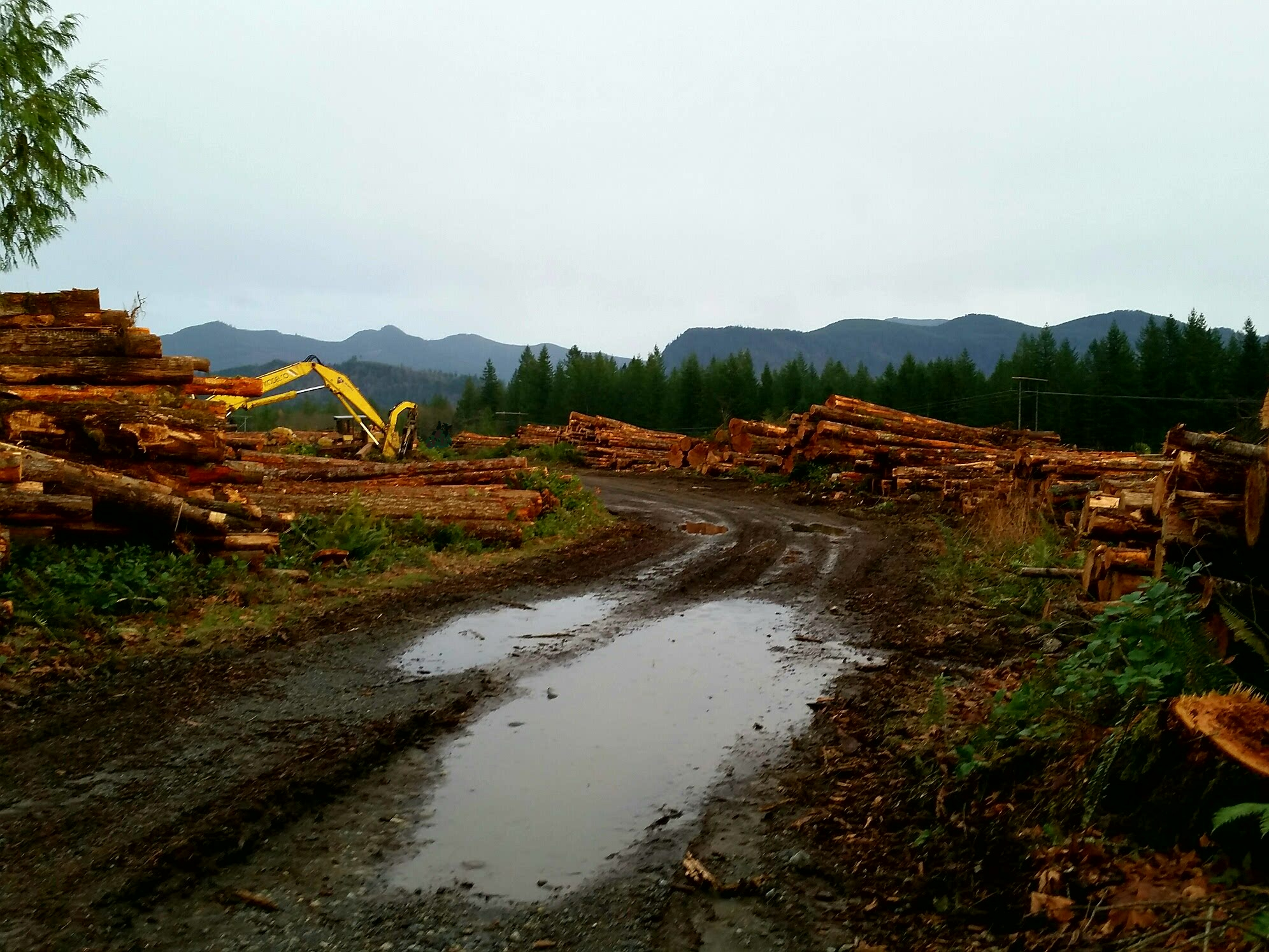 Logging Service, trucking logs, forester, tree removal on private land, real estate cutting of standing timber. Logging most Puget Sound forests. Old shool logging contractor, where a hadshake still means something!