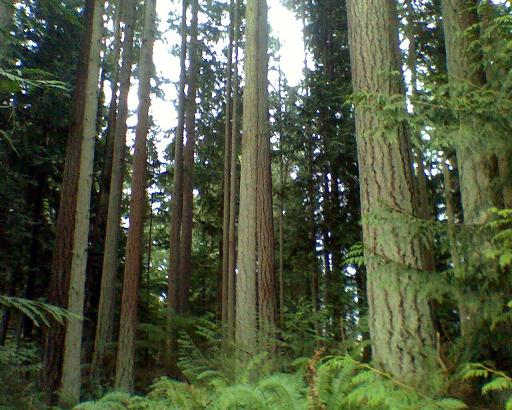 Turn Key logging operations in King County, Kitsap, Pierce and More...