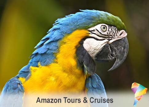 Discover the Amazon Wildlife by traveling with SouthAmerica.travel.